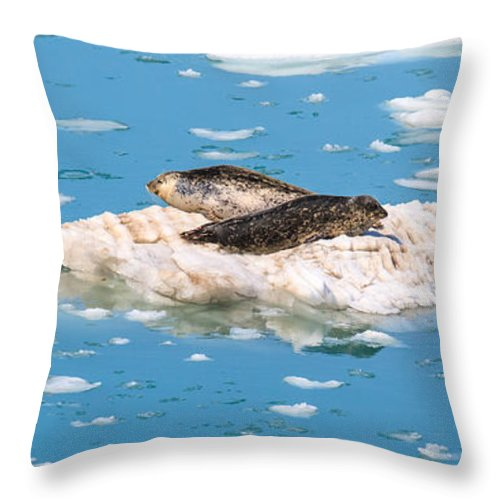 Harbor Seal Throw Pillow featuring the photograph Harbor Seals On Clouds Of Ice by Allan Levin