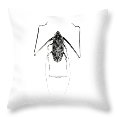 Black-and-white Throw Pillow featuring the digital art Acrocinus I by Geronimo Martin Alonso