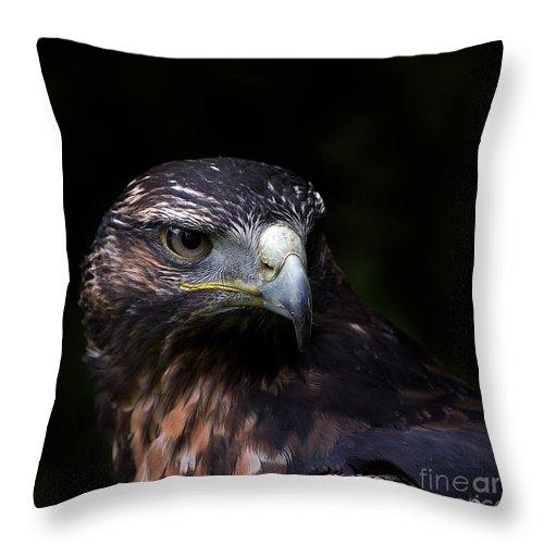 Animals Throw Pillow featuring the photograph Harris Hawk by Joerg Lingnau