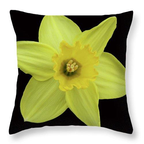 Flowers Throw Pillow featuring the photograph Hart by Krisjan Krafchak