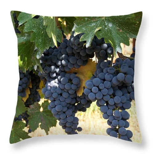 Grapes Throw Pillow featuring the photograph Harvest Time by Gale Cochran-Smith