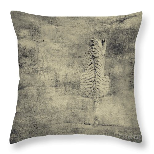 Dipasquale Throw Pillow featuring the photograph Have You Comprehended... by Dana DiPasquale
