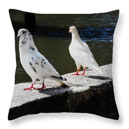 Hawaii Birds Throw Pillow featuring the photograph Hawaii Birds 9 by Ron Kandt