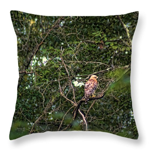 Birds Throw Pillow featuring the photograph Hawk Drying Out by Rick Friedle