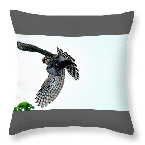 Osprey Flying Away With Prey Throw Pillow featuring the photograph Osprey Flying Away With Prey by Charles J Pfohl