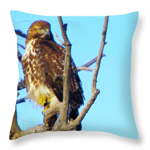 Hawks Throw Pillow featuring the photograph Hawk In A Tree by Jeff Swan