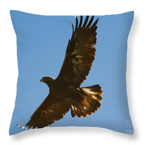Hawk Throw Pillow featuring the photograph Hawk In Flight by David Lee Thompson