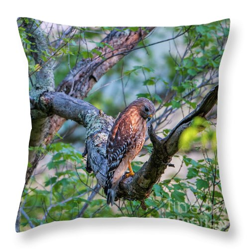 Hawk Throw Pillow featuring the photograph Hawk In Sunlight by Darwin White