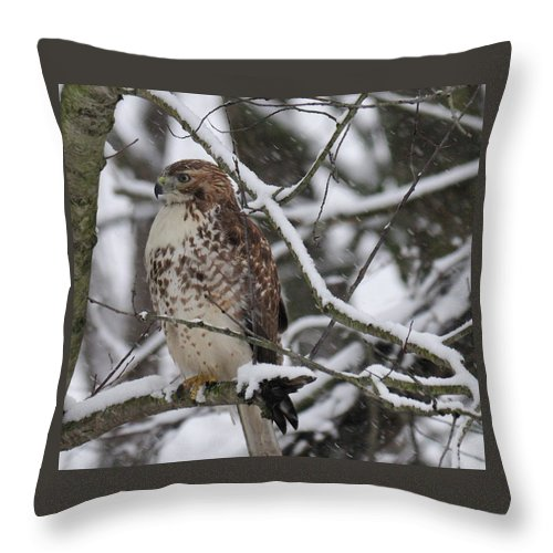 Bird Throw Pillow featuring the photograph Hawk In Winter by David Arment