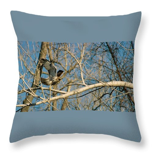 Hawk Throw Pillow featuring the photograph Hawk by Steve Karol