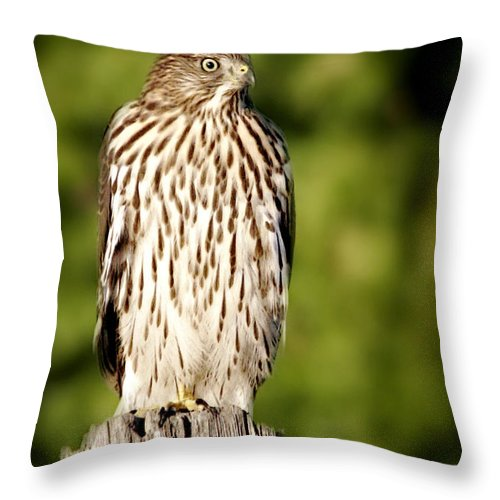 Hawk Throw Pillow featuring the photograph Hawk Waiting For Prey by Christine Till
