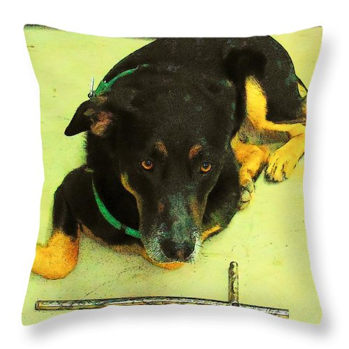 Dog Throw Pillow featuring the photograph He Gets It by Deborah Montana