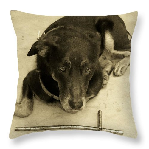 Dog Throw Pillow featuring the photograph He Gets It In Sepia by Deborah Montana