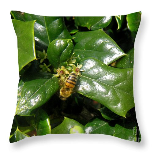 Nature Throw Pillow featuring the photograph Head Over Heels In The Holly by Lucyna A M Green