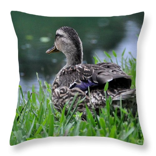 Female Duck Throw Pillow featuring the photograph Headed For The Lake by John Black