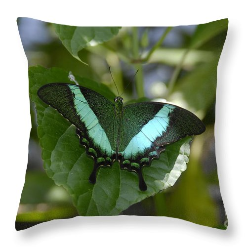 Butterfly Throw Pillow featuring the photograph Heart Leaf Butterfly by David Lee Thompson
