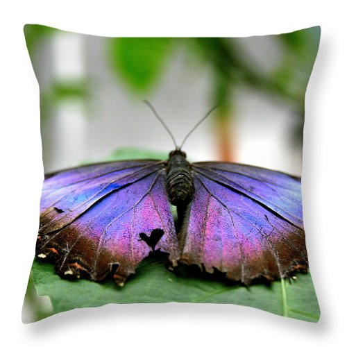 Heart Throw Pillow featuring the photograph Heartstwings by Linda Galok