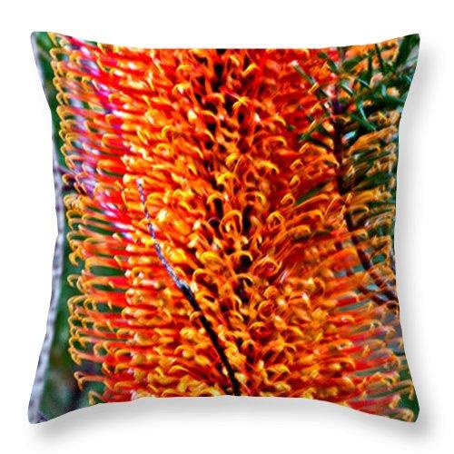 Banksia Ericifolia Throw Pillow featuring the photograph Heath Banksia From Fairfax Walk by Miroslava Jurcik