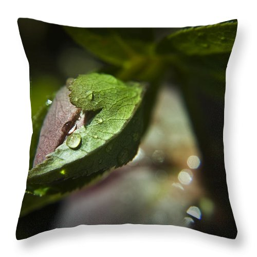 Helleborus Throw Pillow featuring the photograph Helleborus Bud by Teresa Mucha