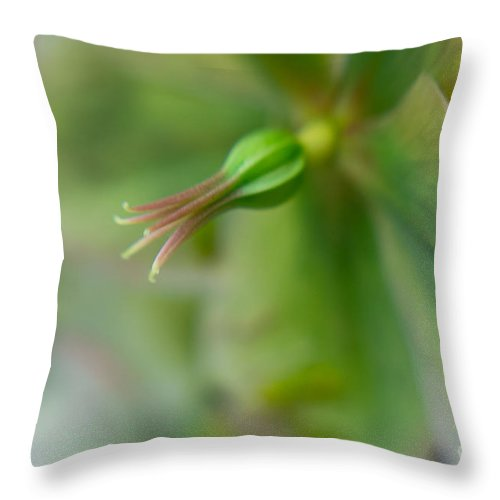 Flora Throw Pillow featuring the photograph Hellibore 2 by Jill Greenaway