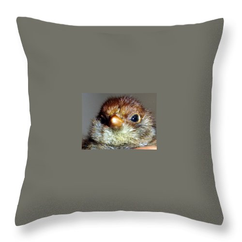 Chick Throw Pillow featuring the photograph Hello Chick by Susan Baker