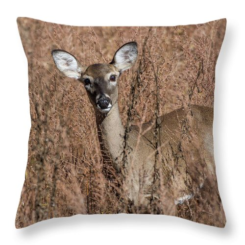 Wildlife Throw Pillow featuring the photograph Hello by John Benedict