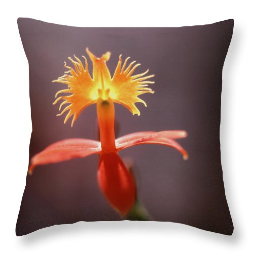 Flower Photos Throw Pillow featuring the photograph Hello There by Steven Huszar