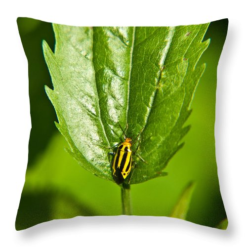 Hemiptera Throw Pillow featuring the photograph Hemiptroid Sucking Bug by Douglas Barnett