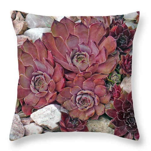 Landscape Throw Pillow featuring the photograph Hens And Chickens by Steve Karol