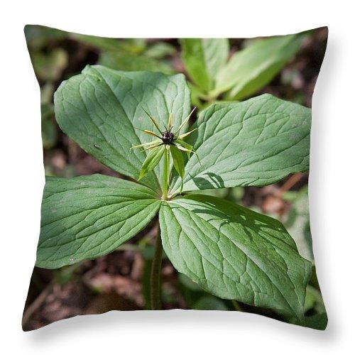 Herb Paris.flower.plant Throw Pillow featuring the photograph Herb Paris by Bob Kemp