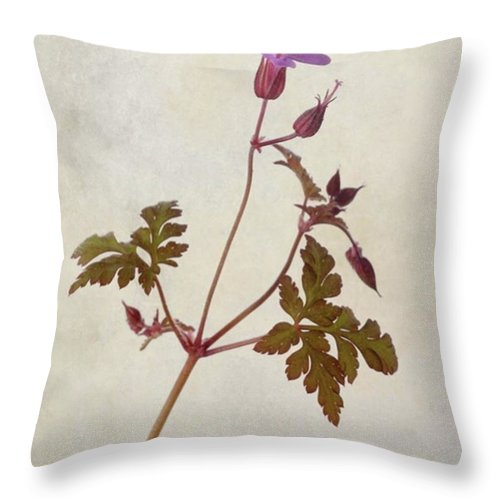 Beautiful Throw Pillow featuring the photograph Herb Robert - Wild Geranium  #flower by John Edwards