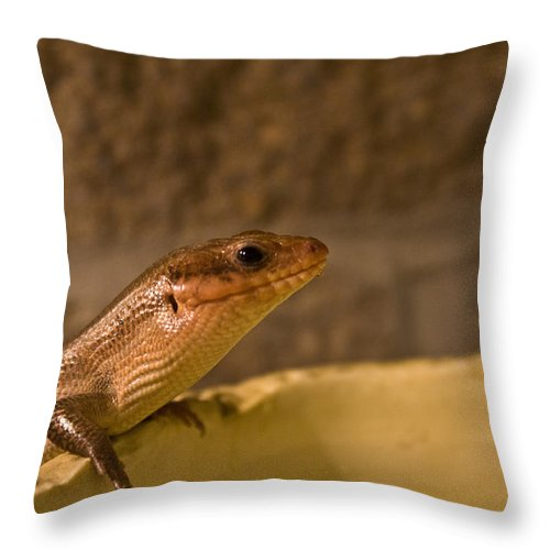 Skink Throw Pillow featuring the photograph Here by Douglas Barnett