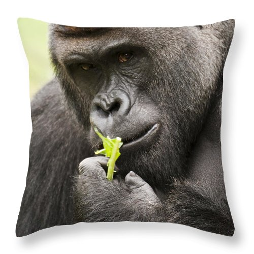 Gorilla Throw Pillow featuring the photograph Here Is Looking At You. by Chad Davis