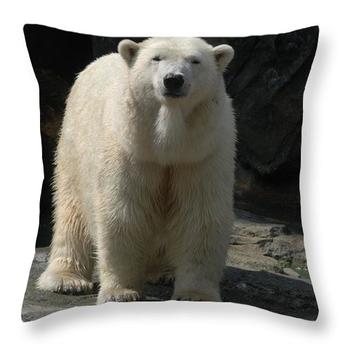 Polar Bear Throw Pillow featuring the photograph Heres Looking At You by Richard Bryce and Family