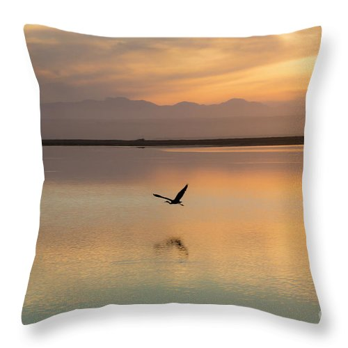Heron Throw Pillow featuring the photograph Heron at sunset by Sheila Smart Fine Art Photography