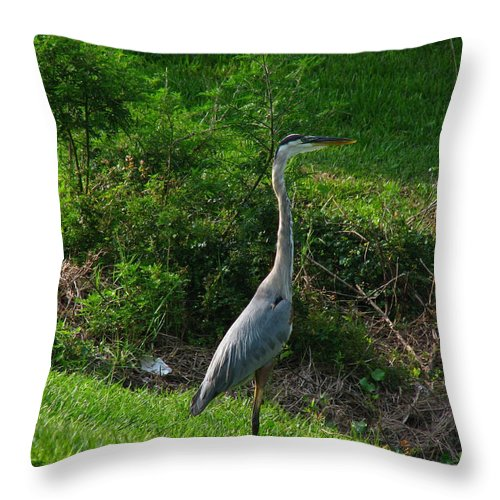 Patzer Throw Pillow featuring the photograph Heron Blue by Greg Patzer