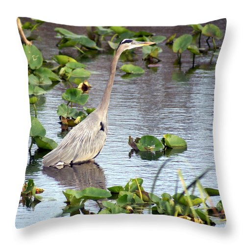 Heron Throw Pillow featuring the photograph Heron Fishing In The Everglades by Marty Koch