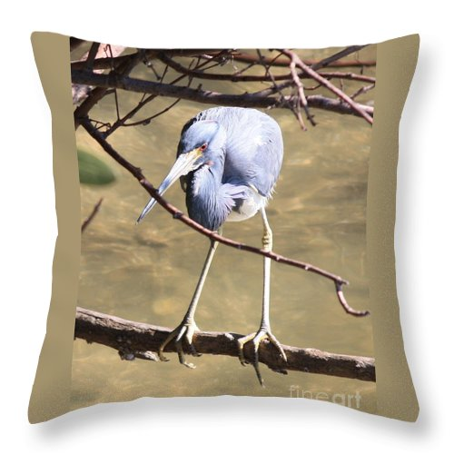Tricolored Heron Throw Pillow featuring the photograph Heron On Branch by Carol Groenen