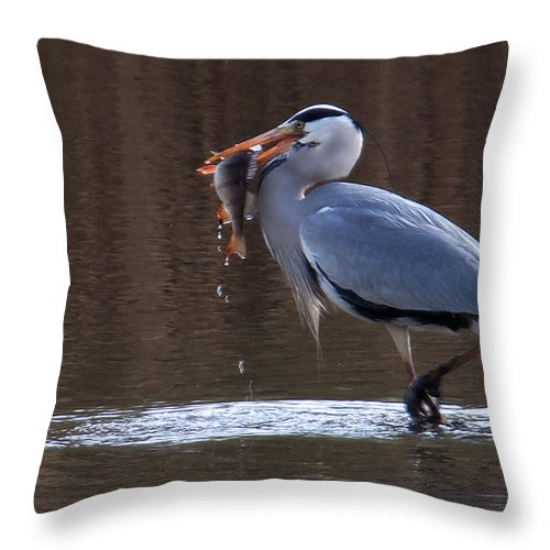 Heron Throw Pillow featuring the photograph Heron With Perch by Bob Kemp