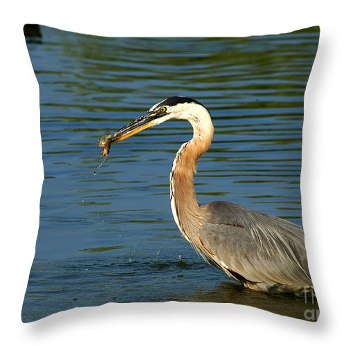 Clay Throw Pillow featuring the photograph Herons Catch by Clayton Bruster