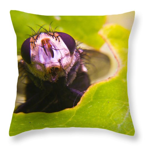 Fly Throw Pillow featuring the photograph Hi There by Douglas Barnett