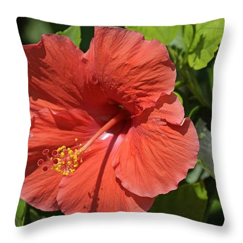 Hibiscus Throw Pillow featuring the photograph Hibiscus by Kenneth Albin
