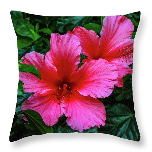 Flower Throw Pillow featuring the photograph Hibiscus by Robert Moorhead
