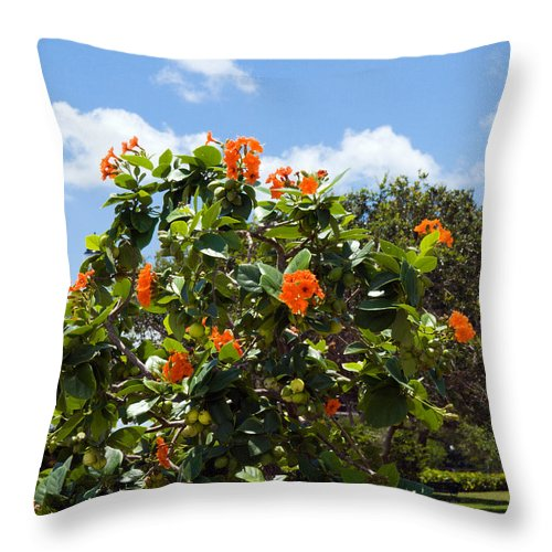Hibiscus; Rosasinensis; Rosa; Sinensis; Rosa-sinensis; Tree; Bush; Shrub; Plant; Flower; Flowers; Fl Throw Pillow featuring the photograph Hibiscus Rosasinensis With Fruit by Allan Hughes