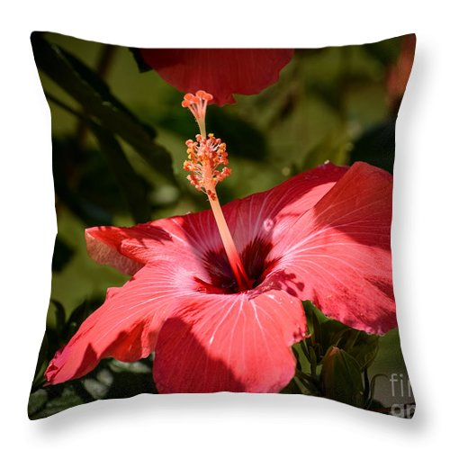 Red Hibiscus Throw Pillow featuring the photograph Hibiscus by Zina Stromberg