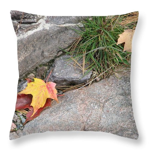 Fall Throw Pillow featuring the photograph Hiding by Kelly Mezzapelle