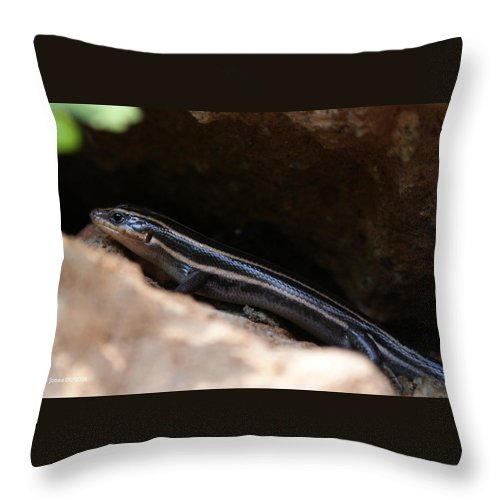 Lizard Throw Pillow featuring the photograph Hiding Out by Shelley Jones