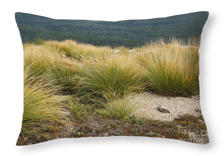 Subalpine Dwarf Shrubland Throw Pillow featuring the photograph Highland Rush - White Mountains New Hampshire Usa by Erin Paul Donovan