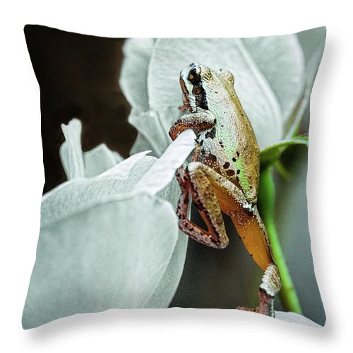 Frog Throw Pillow featuring the photograph Highstepper by Marvin Mast