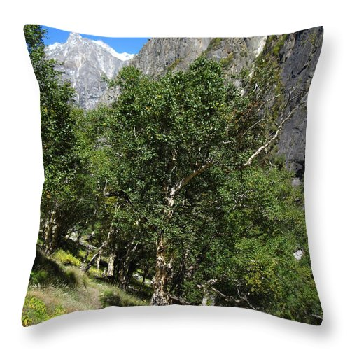 Bhojpatra Throw Pillow featuring the photograph Himalayan Bhojpatra Trees 4 by Oliver Riedel